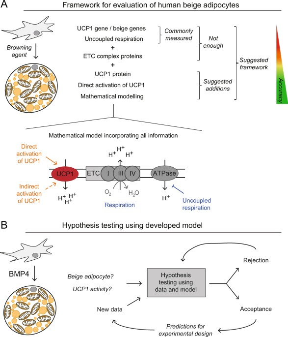 Systems Biology Reveals Uncoupling Beyond Ucp1 In Human White Fat