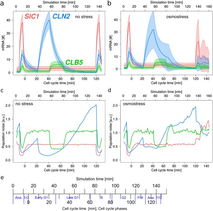 Transcriptional timing and noise of yeast cell cycle regulatorsa simulated time courses of transcript numbers and molecular noise during cell cycle for sic1 cln2 and clb5 under optimal conditions and under osmostress ccuart Images