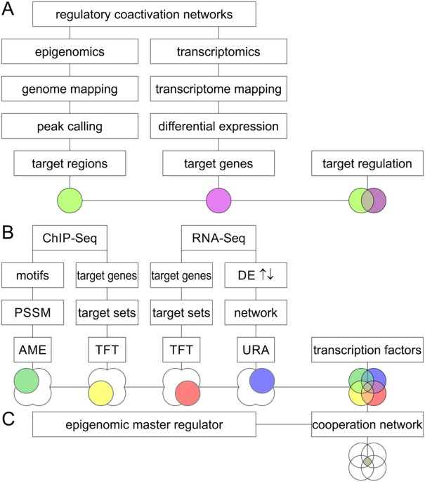A Network Of Epigenomic And Transcriptional Cooperation Encompassing