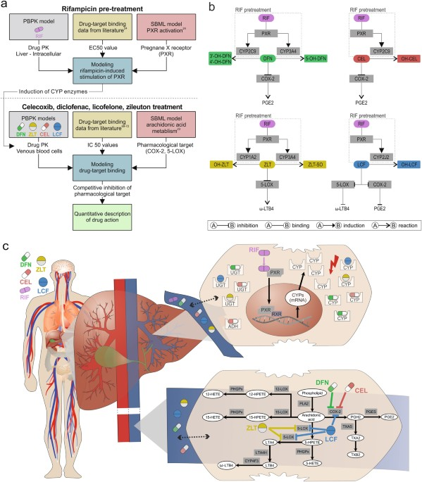 Using quantitative systems pharmacology to evaluate the drug