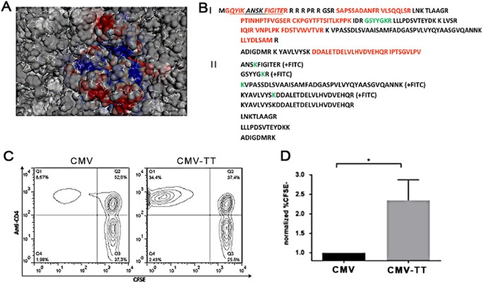 Chemical Reactivity Of Surface Exposed Lysine Residues And T Cell Incorporated Universal Epitope A Representation Cryoem