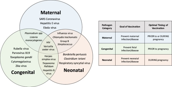 Pregnancy and infection: using disease pathogenesis to