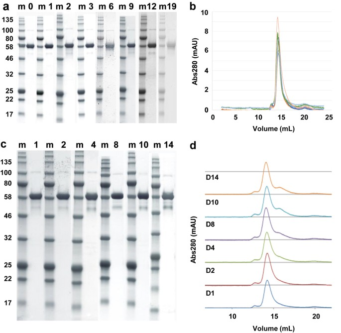Production quality control stability and potency of cgmp produced fig 4 stability fandeluxe Gallery
