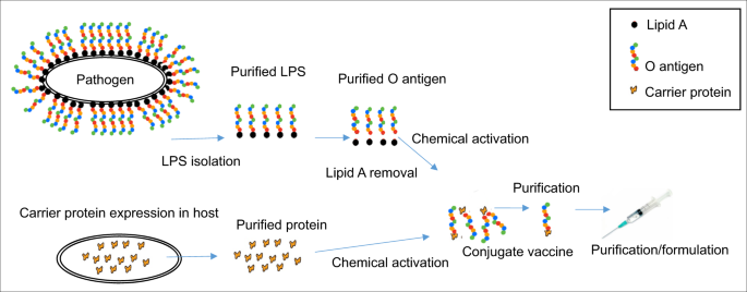 Recent advances in the production of recombinant