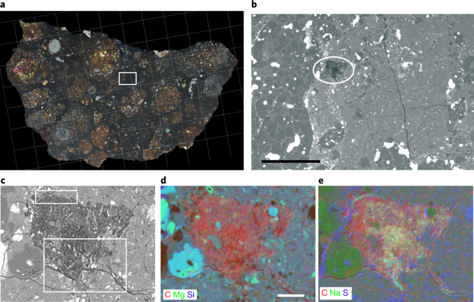A cometary building block in a primitive asteroidal meteorite