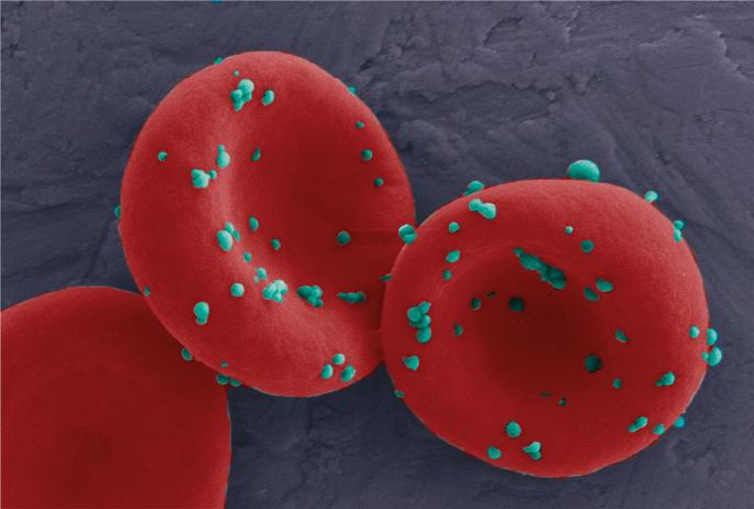 Prolonging immune responses