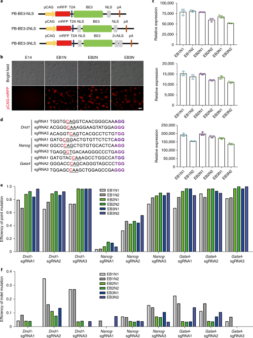 CRISPR–Cas9-mediated base-editing screening in mice