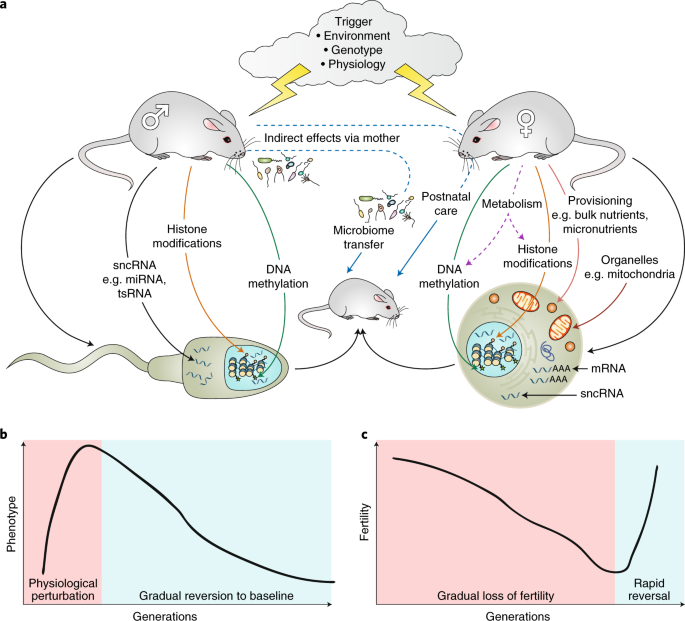 Shared Epigenetic Changes Underlie >> Intergenerational And Transgenerational Epigenetic Inheritance In