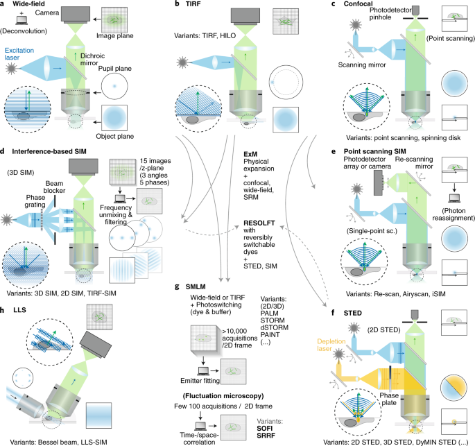 Super-resolution microscopy demystified | Nature Cell Biology