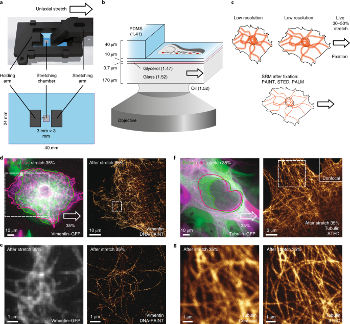 Cell stretching is amplified by active actin remodelling to deform and recruit proteins in mechanosensitive structures