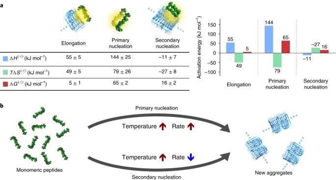 Distinct Thermodynamic Signatures Of Oligomer Generation In The