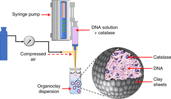 Enzyme Powered Motility In Buoyant Organoclaydna Protocells