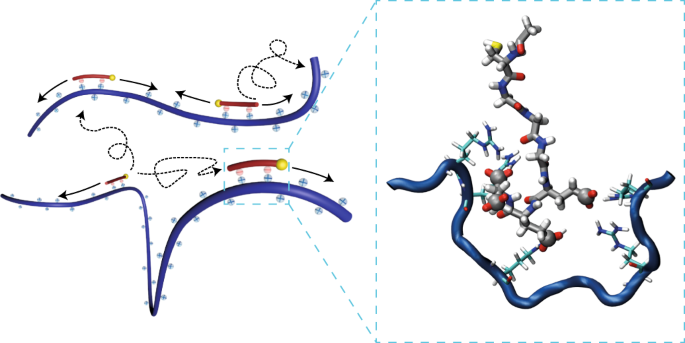 Catalytic transport of molecular cargo using diffusive binding along a polymer track