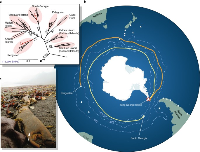 nature.com - Antarctica's ecological isolation will be broken by storm-driven dispersal and warming