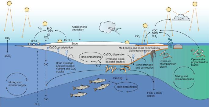 The future of Arctic sea-ice biogeochemistry and ice-associated ecosystems
