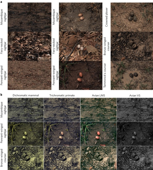 Improvement Of Individual Camouflage Through Background Choice In