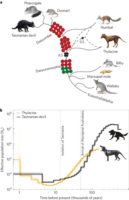 Genome Of The Tasmanian Tiger Provides Insights Into The Evolution