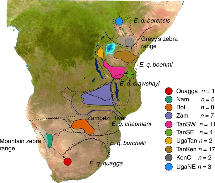 A southern African origin and cryptic structure in the highly