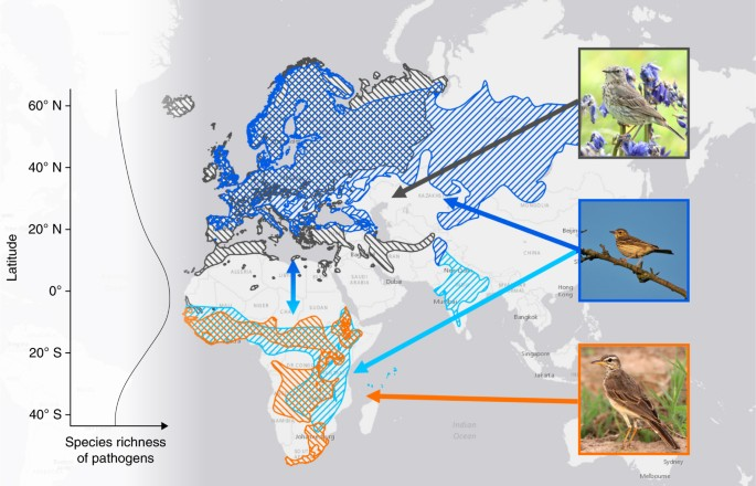 The Evolution Of Immunity In Relation To Colonization And Migration