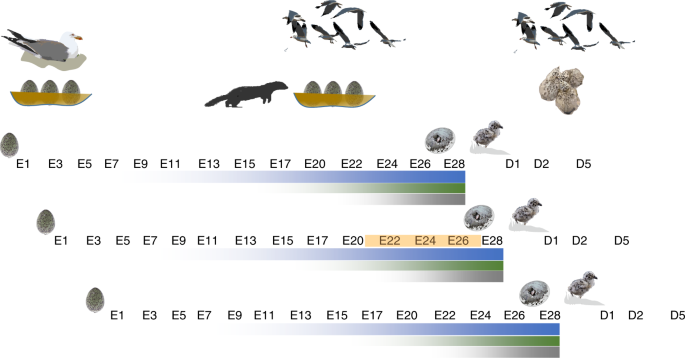 Bird embryos perceive vibratory cues of predation risk from