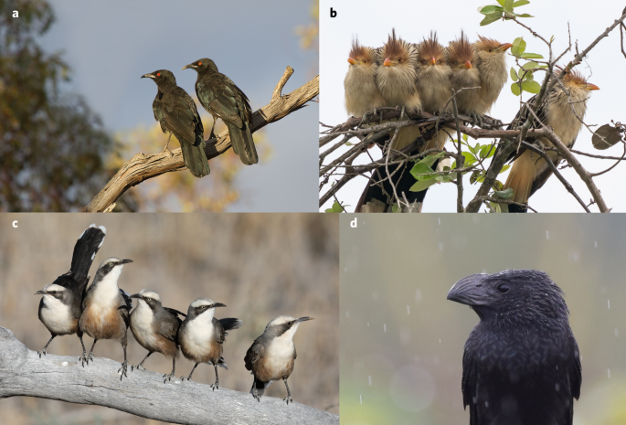 Group formation and the evolutionary pathway to complex sociality in birds