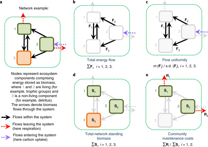 Biodiversity increases multitrophic energy use efficiency, flow and storage in grasslands