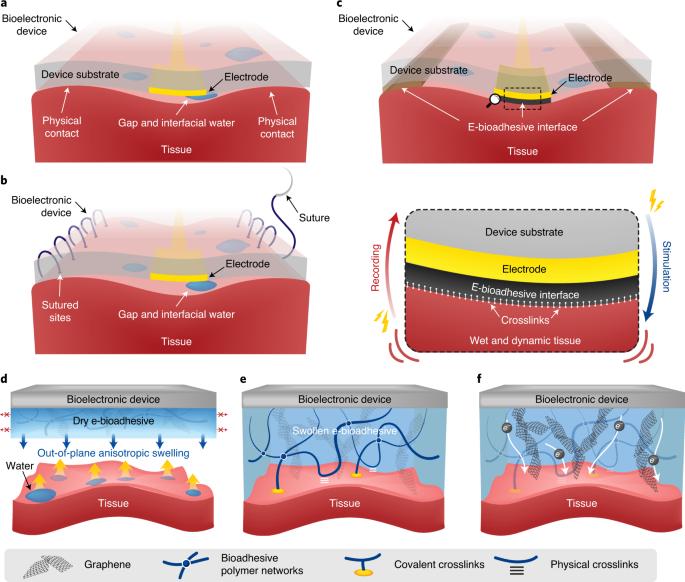 Electrical bioadhesive interface for bioelectronics