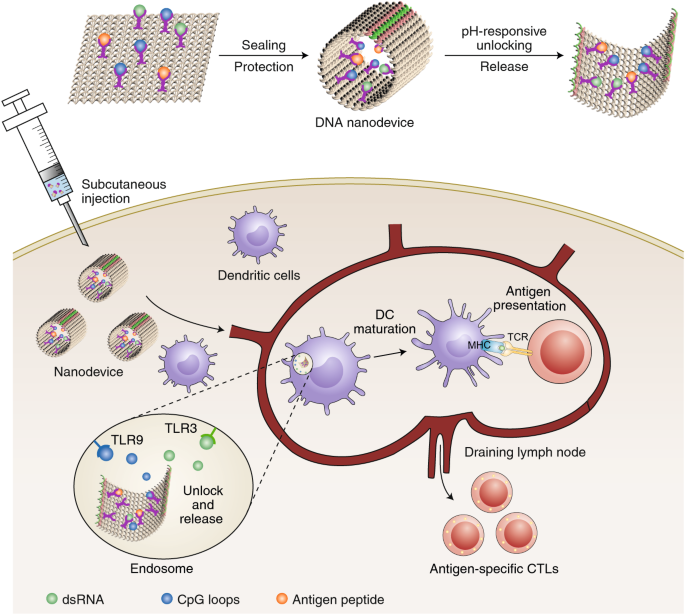 Nanodevices for cancer vaccination