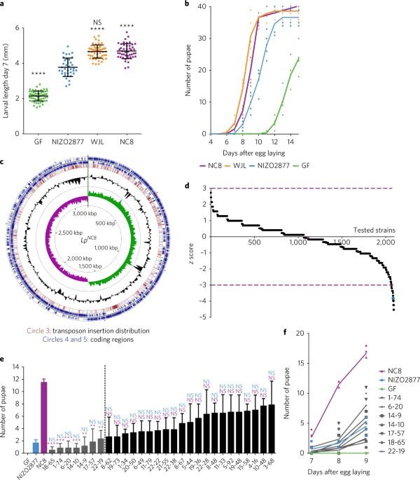 D Alanylation Of Teichoic Acids Contributes To Lactobacillus
