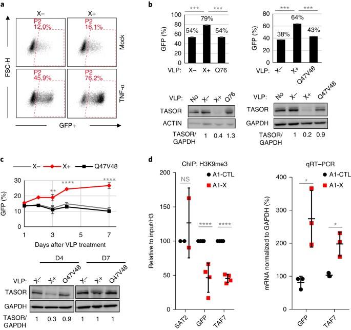 HIV-2/SIV viral protein X counteracts HUSH repressor complex