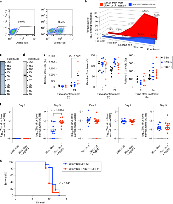 <i>Aedes aegypti</i> AgBR1 antibodies modulate early Zika virus infection of mice