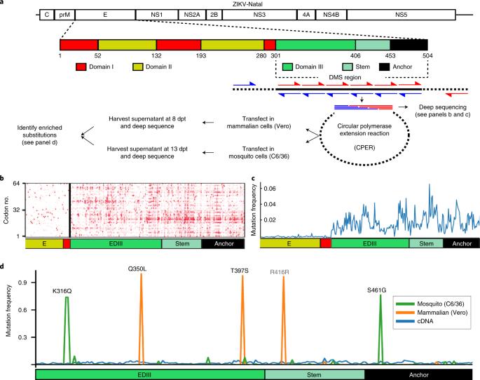Determinants of Zika virus host tropism uncovered by deep mutational scanning