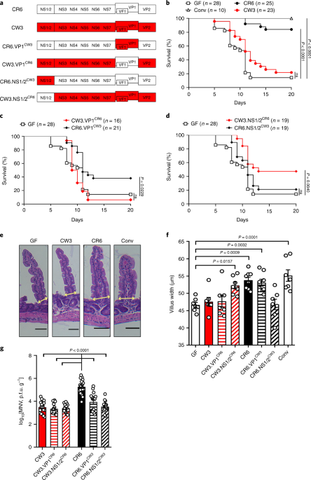 IFN-I and IL-22 mediate protective effects of intestinal viral infection