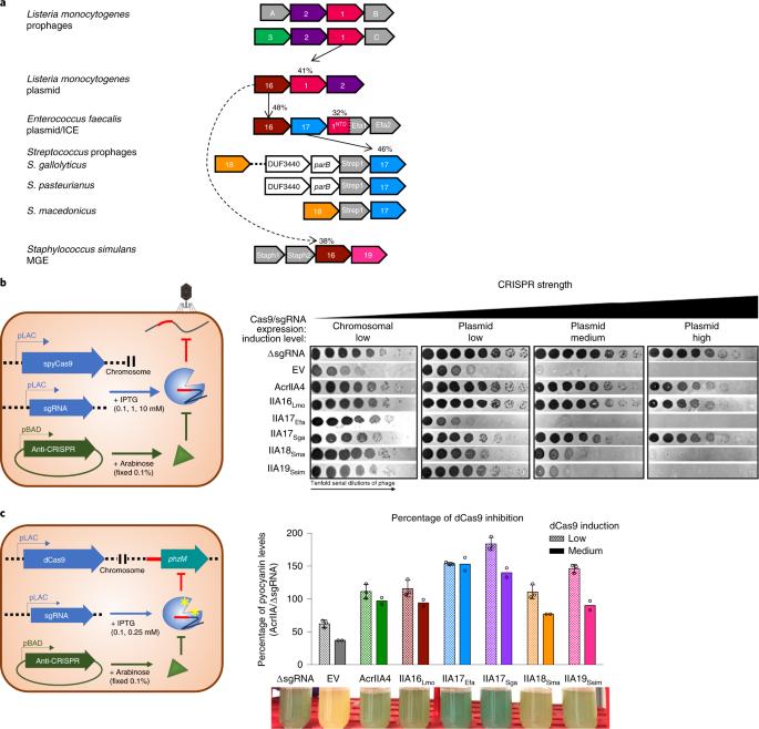 Broad-spectrum anti-CRISPR proteins facilitate horizontal gene transfer