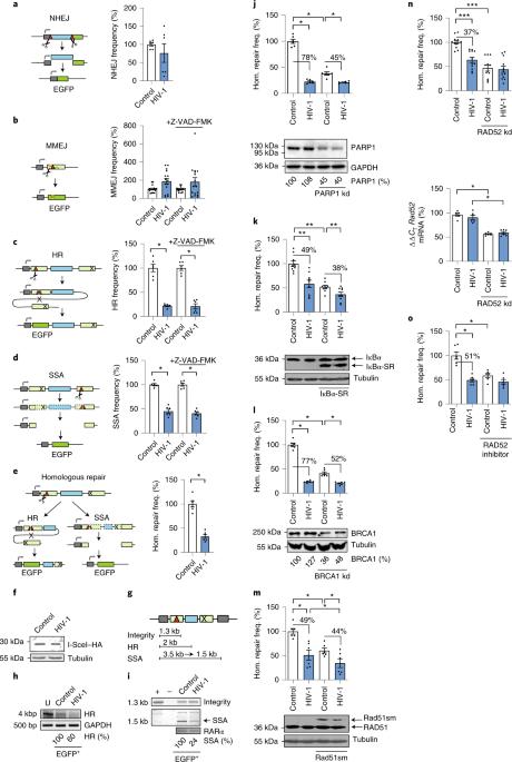 Vpu modulates DNA repair to suppress innate sensing and hyper-integration of HIV-1
