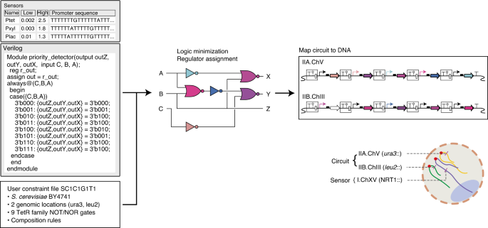 Genetic Circuit Design Automation For Yeast Nature Microbiology
