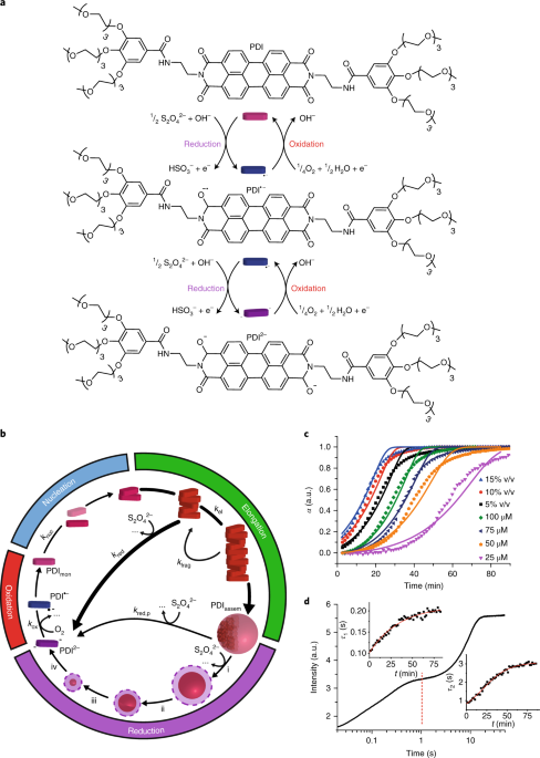Oscillations Travelling Fronts And Patterns In A Supramolecular