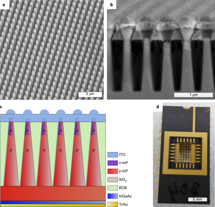 Tapered InP nanowire arrays for efficient broadband high-speed single-photon detection