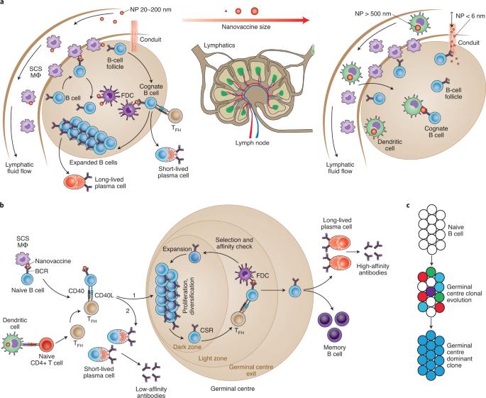 Immunology, Pathogens & Therapeutics - cover