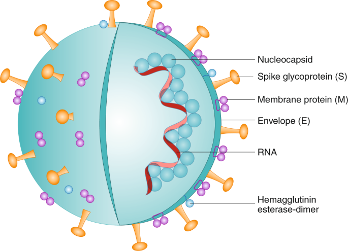 Immune-mediated approaches against COVID-19   Nature Nanotechnology