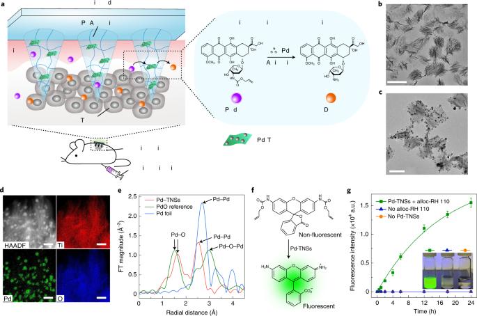 Bioorthogonal catalytic patch
