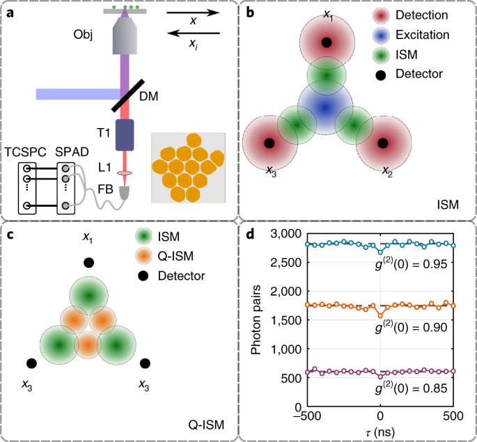 Super-resolution enhancement by quantum image scanning microscopy