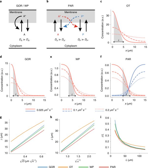 molecular factors underlying rate - 604×685