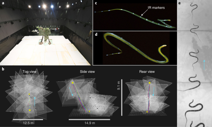 Undulation enables gliding in flying snakes
