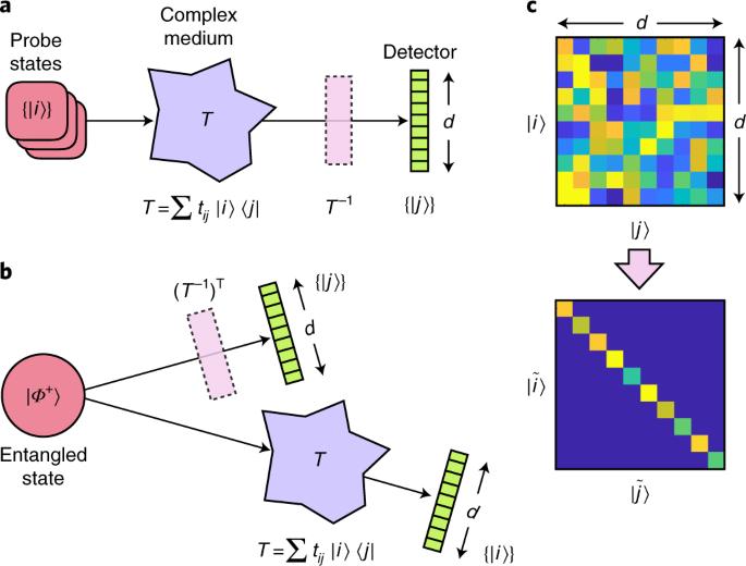 Unscrambling entanglement through a complex medium