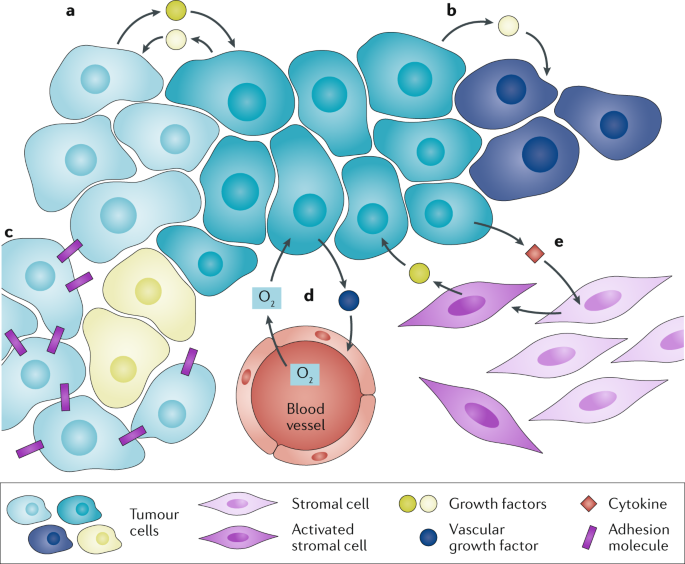 Cooperation among cancer cells: applying game theory to cancer