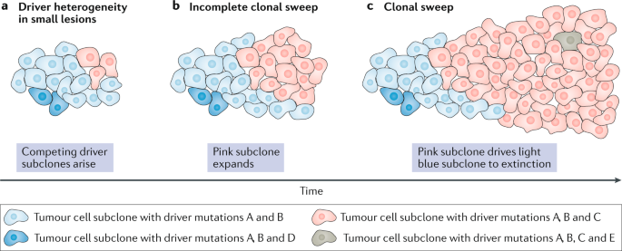 pancreatic cancer genetic heterogeneity