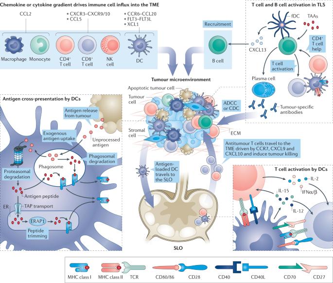 ovarian cancer vaccines