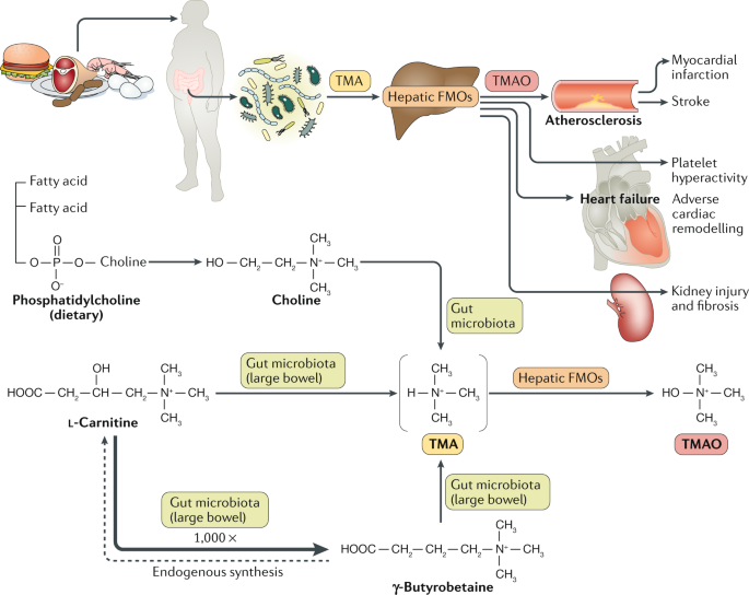 Dietary metabolism, the gut microbiome, and heart failure