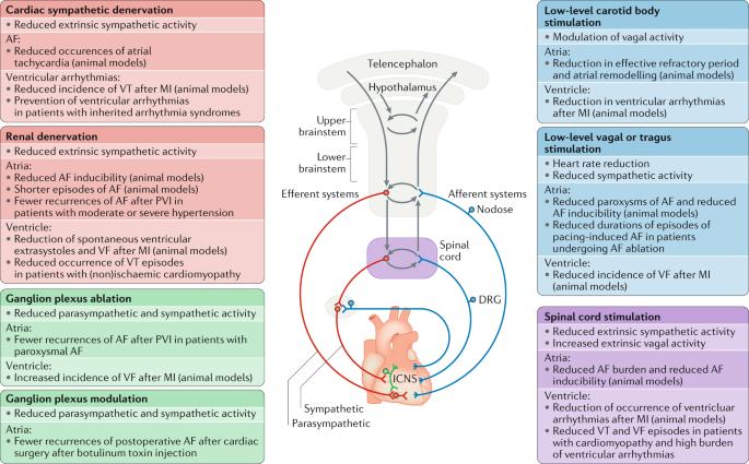 The autonomic nervous system and cardiac arrhythmias: current ...
